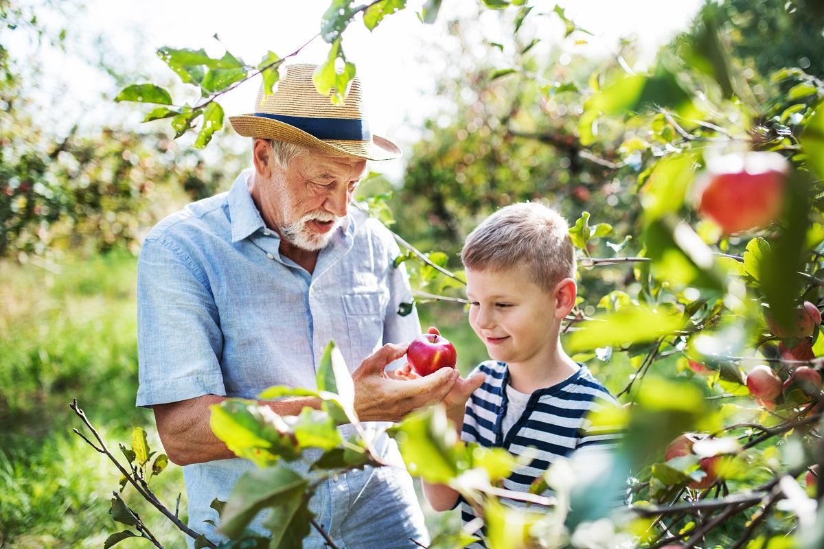 opa-enkel-apfelbaum